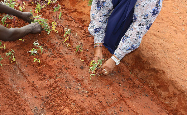 Habiba plants crops on her farm