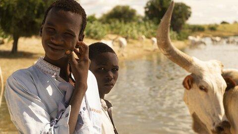 Tchad: Le Kanem, terre de bétail