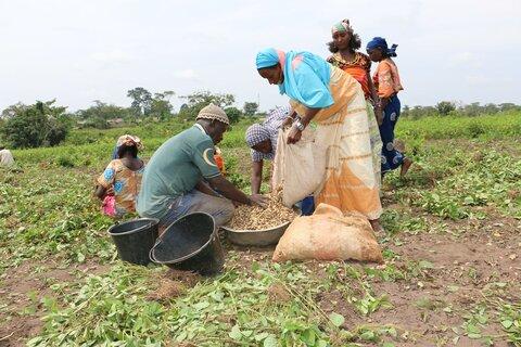 La terre de Mbile offre ses arachides pour renforcer la cohésion sociale entre les communautés hôte et réfugiée.