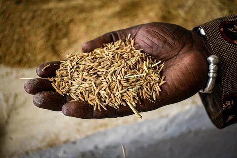 La riziculture pour l'autonomisation des agriculteurs maliens