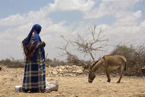 LE SOMALILAND AU BORD DE LA FAMINE