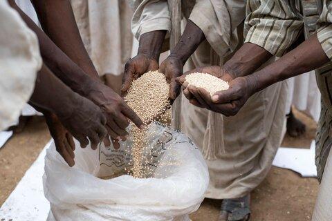 Des sacs hermétiques pour réduire les pertes post-récolte au Soudan