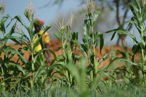 Sahel central : réhabiliter des champs pour cultiver la paix