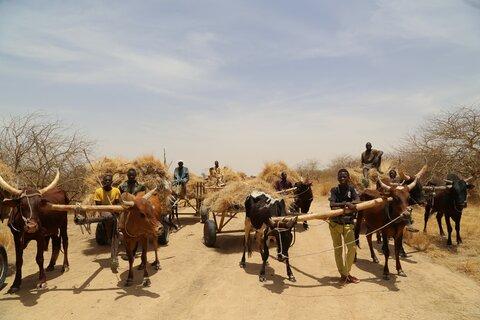 Quand la résilience met fin à la migration au Sahel