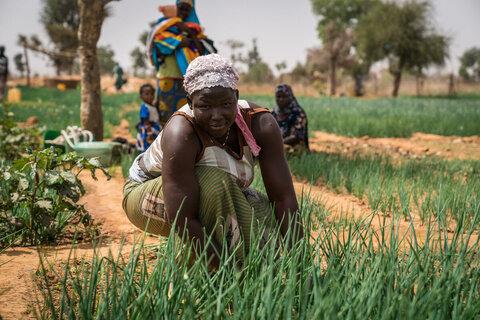 Propagation de la faim : le rapport sur la sécurité alimentaire confirme les pires craintes du PAM